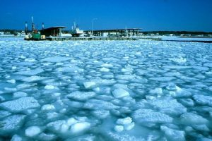 熱を良く伝える氷も魚達を守る不思議な断熱材