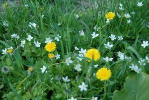 道端の草花も自然エネルギーの芸術作品