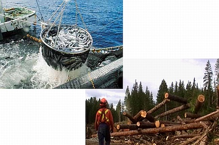 海と森の自然エネルギーの結晶