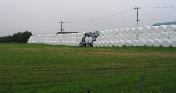 飼料用の干し草の山:大規模?それとも小規模